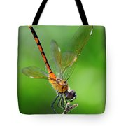 Pennant Dragonfly Obilisking Tote Bag