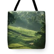 People Walking Through Lujeri Tea Tote Bag