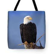 Perched Bald Eagle Tote Bag