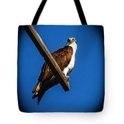 Perching Osprey Tote Bag