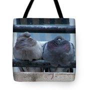 Pigeons Perching Tote Bag