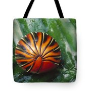 Pill Millipede Glomeris Sp Rolled Tote Bag by Cyril Ruoso