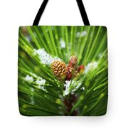 Pine Cone Cloeup Tote Bag