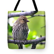 Pine Siskin Finch Baby Tote Bag