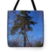 Pine Tree Standing Tall Tote Bag