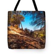 Pine Trees In El Chorro. Spain Tote Bag