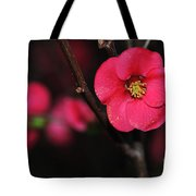 Pink Blossom In The Evening Tote Bag