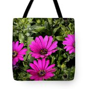 Pink Daisy's Tote Bag