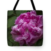 Pink English Rose Tote Bag