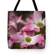 Pink Flowering Dogwood - Cornus Florida Rubra Tote Bag