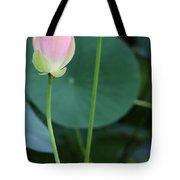 Pink Lotus Buds Tote Bag