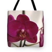 Pink Phalaenopsis Orchid  Tote Bag