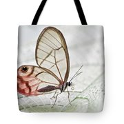 Pink-tipped Clearwing Satyr Cithaerias Tote Bag