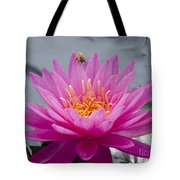 Pink Water Lily Rose Arey With Bee Tote Bag