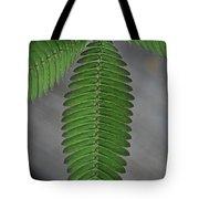 Pinnate Tote Bag