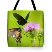 Pipevine Swallowtails In Tandem Tote Bag
