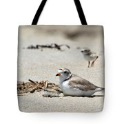 Piping Plover Mom And Two Babies Tote Bag