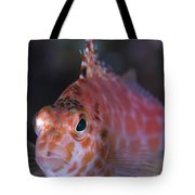 Pixy Hawkfish, Kimbe Bay, Papua New Tote Bag