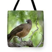 Plain Chachalaca  Tote Bag