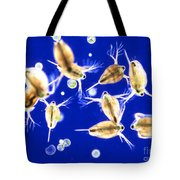 Plankton, Daphnia, And Volvox Tote Bag by M. I. Walker