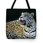 Play With Me Tote Bag by Sabrina L Ryan