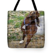Please Exonerate Me 2 - Billy Goat Tote Bag