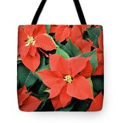 Poinsettia Varieties Tote Bag