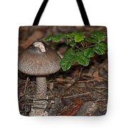 Point Lobos Park  Tote Bag
