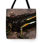 Poison Arrow Frog With Tadpoles Tote Bag