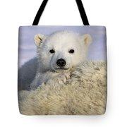 Polar Bear Cub Canada Tote Bag