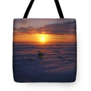 Polar Bear In Arctic Sunset Tote Bag