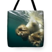Polar Bear Swiming Away Wager Bay Canada Tote Bag