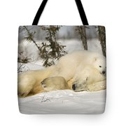 Polar Bear With Cub In Snow Tote Bag