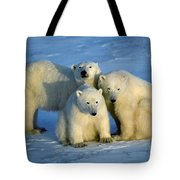 Polar Bear With Cubs Tote Bag