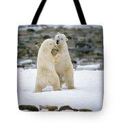 Polarbears, Churchill, Manitoba Tote Bag