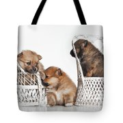 Pomeranian 3 Tote Bag by Everet Regal