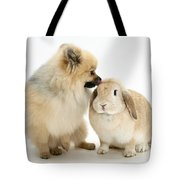 Pomeranian Dog And Rabbit Tote Bag
