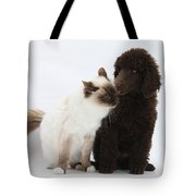 Poodle Pup And Cat Tote Bag