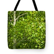 Poplar Tree And Leaves No.368 Tote Bag