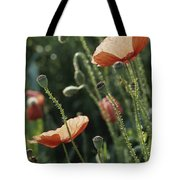 Poppies In A Field In Provence Tote Bag