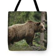 Portrait Of A Brown Bear Tote Bag