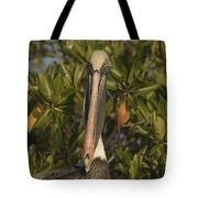 Portrait Of A Brown Pelican Pelecanus Tote Bag