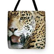 Portrait Of A Captive Jaguar Panthera Tote Bag