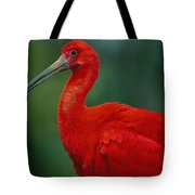 Portrait Of A Captive Scarlet Ibis Tote Bag