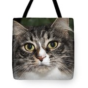 Portrait Of A Cat With Two Toned Eyes Tote Bag