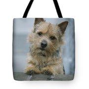 Portrait Of A Norwich Terrier Tote Bag