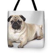Portrait Of A Pug Dog Tote Bag