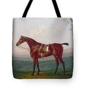 Portrait Of A Race Horse Tote Bag by Daniel Clowes
