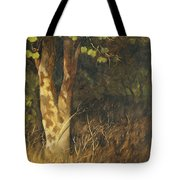 Portrait Of A Tree Trunk Tote Bag