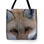 Portrait Of Adult Red Fox Tote Bag